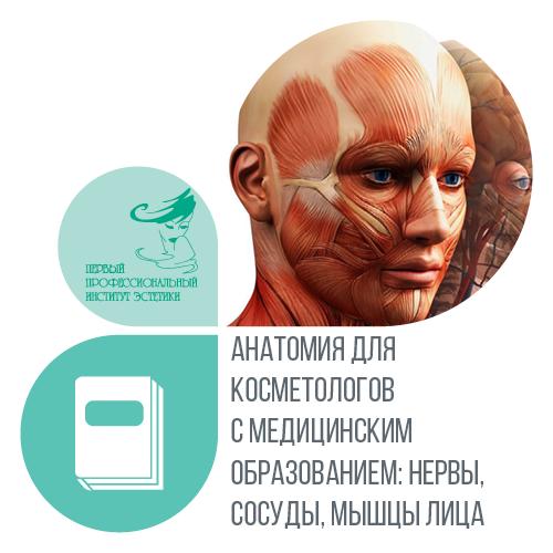 Анатомия для косметологов с медицинским образованием: нервы, сосуды, мышцы лица