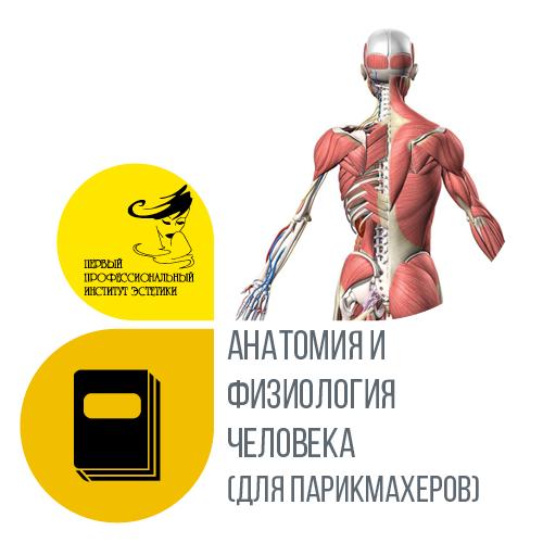 Анатомия и физиология человека (для парикмахеров)